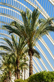 Beautiful Palm Trees In Greenhouse Royalty Free Stock Photography