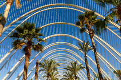 Beautiful Palm Trees In Greenhouse Stock Photos