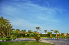 Beautiful palm trees on the hotel Stock Images
