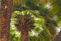 Palm Trees From Below royalty free stock image