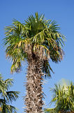 Beautiful palm trees Royalty Free Stock Photography