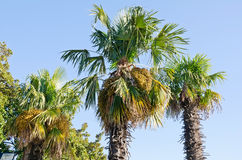 Beautiful palm trees Royalty Free Stock Photos