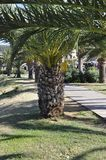 Palm trees in the Public Park Garden from the Rethymno city of Crete in Greece. Beautiful Palm trees in the Public Park Garden from Rethymno city of Crete in stock photo