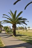 Palm trees in the Public Park Garden from the Rethymno city of Crete in Greece. Beautiful Palm trees in the Public Park Garden from Rethymno city of Crete in stock images