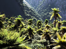 Beautiful palm trees Stock Photography