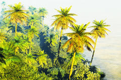 Beautiful palm trees Royalty Free Stock Images