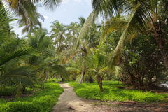 Beautiful palm trees in the Tayrona natural resort.  Royalty Free Stock Photography