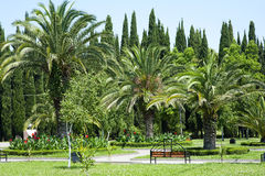 Beautiful palm trees in tropical garden royalty free stock photography