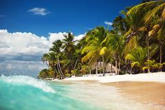 Beautiful palm trees on the tropical, wild beach Royalty Free Stock Photography