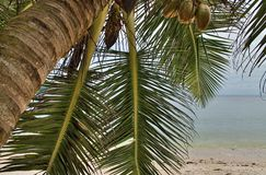 Beautiful palm trees at the white sand beach on the paradise islands Seychelles stock image