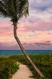 Beautiful palm on a tropic beach. Stock Photography