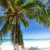 Beautiful palm on white beach, Boracay island Royalty Free Stock Images