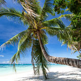 Beautiful palm on white beach, Boracay island Royalty Free Stock Photos