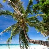 Beautiful palm on white beach, Boracay island Royalty Free Stock Photography