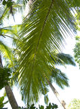 Beautiful palms at the beach Stock Photo