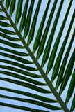 Beautiful palms leaf texture backgrounds. Pattern beautiful palms leaf backgrounds Stock Photos
