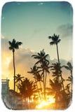 Beautiful palms on sky background Stock Photography