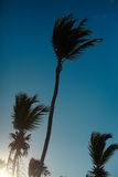 Beautiful palms on sky background Royalty Free Stock Photos