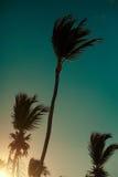 Beautiful palms on sky background Stock Photo