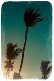 Beautiful palms on sky background Stock Image