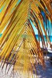 Beautiful palms on sky background Stock Photos