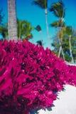 Beautiful palms on sky background Royalty Free Stock Image