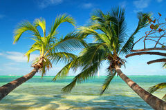 Beautiful palms on tropical beach Stock Photo