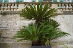 Beautiful palmtree in baroque royal park stock photos