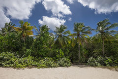 Beautiful palmtrees at a tropical beach Royalty Free Stock Photos