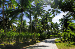 Beautiful palmtrees. In Union Estate, La Digue, Seychelles islands, with granite mountains Royalty Free Stock Images
