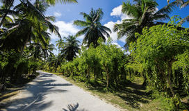 Beautiful palmtrees. In Union Estate, La Digue, Seychelles islands, with granite mountains Stock Image