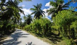 Beautiful palmtrees Stock Image