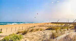 Beautiful Palombaggia beach Stock Images