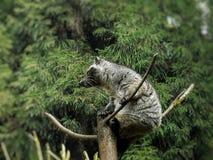 A beautiful panda on a tree stock image