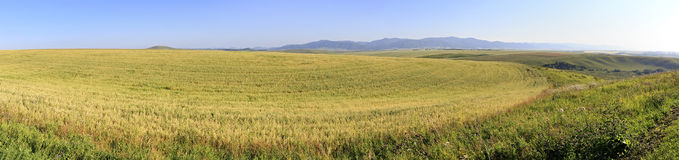 Beautiful panorama agricultural fields in August Royalty Free Stock Photo