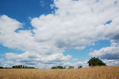 Beautiful panorama with blue sky. A field, trees, blue sky and white clouds Stock Images