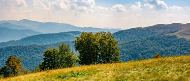 Beautiful panorama of Carpathian mountains. In early autumn weather. few beech tree tops behind the grassy slope of a ridge under sky with clouds Royalty Free Stock Image