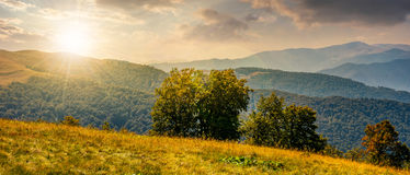 Beautiful panorama of Carpathians at sunset. Beautiful panorama of Carpathian mountains in early autumn weather. few beech tree tops behind the grassy slope of a Royalty Free Stock Photography