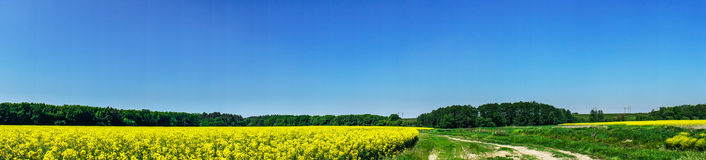 Beautiful panorama of golden rapefield and blue sky. Royalty Free Stock Images