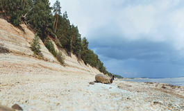 Beautiful panorama of great river, pine forest, and girl hiker at a big boulder Royalty Free Stock Photos