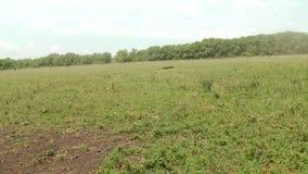 Beautiful panorama of green pastures stock footage