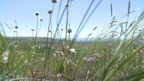Beautiful panorama of green pastures stock video footage