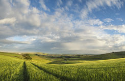 Beautiful panorama landscape South Downs countryside in Summer Stock Photo