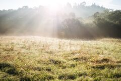 Free Beautiful Panorama Landscape With Sun And Forest And Meadow At Sunrise. Stock Images - 183607914