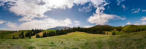 Beautiful panorama of mountainous area in spring. Spruce forest on grassy hills of Pylypets valley. Borzhava mountain ridge with snowy tops in the distance on Royalty Free Stock Image