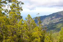 Beautiful panorama of pine forest with sunny summer day. Coniferous trees. Sustainable ecosystem. Tenerife, Teide Royalty Free Stock Image