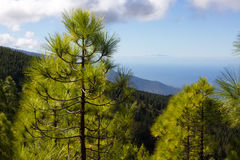 Beautiful panorama of pine forest with sunny summer day. Coniferous trees. Sustainable ecosystem. Tenerife, Teide Royalty Free Stock Images