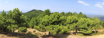 Beautiful panorama of pine trees on mountain top. Royalty Free Stock Photography