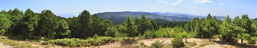 Beautiful panorama of pine trees on a mountain top. Stock Photos
