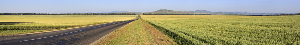 Beautiful panorama the road among farm fields Royalty Free Stock Photography